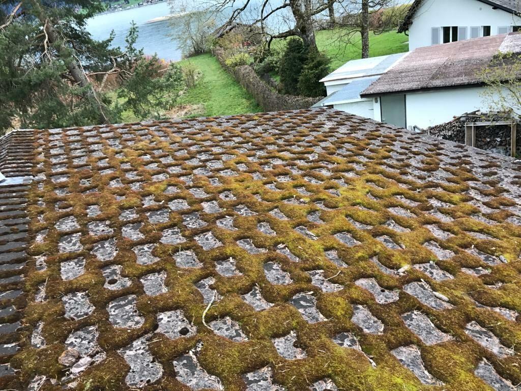 Moos auf Eternit Dach reinigen